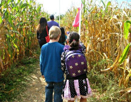 The Amazing Maize Maze at the Queens County Farm Museum