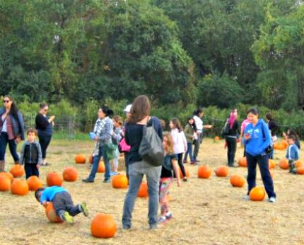 Queens County Farm Museum Pumpkin Patch