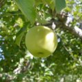 Fishkill Farms: Eco-Friendly Apple Picking in Lower Hudson Valley