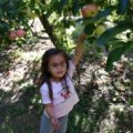 A Day Trip: Apple Picking at Karabin Farms in Southington, CT