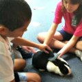 Animal Care Classes for NYC Kids: Feed, Care and Talk to the Animals