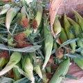 Boston Area Farmers' Markets are in Full Swing – June Openings