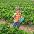 New Jersey's Best Summer Pick-Your-Own Farms