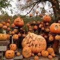 Fall New England Pumpkin Festivals for Families