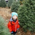 Where to Cut Your Own Christmas Tree Near NYC