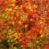 Fall Foliage in New Jersey - 6 Great Parks for Autumn Leaves