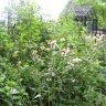 Wild flowers in the Nature Center Garden