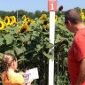 Weekend Fun for CT Kids: Sunflowers, Cars, Carnivals and Sailing August 1-2