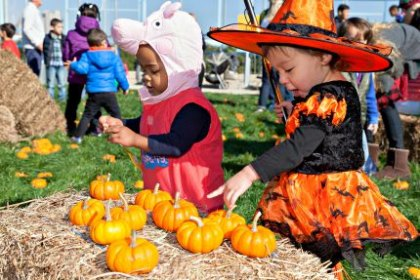 24 NYC Harvest Festivals with Pumpkin Patches, Hayrides and Fall Crafts