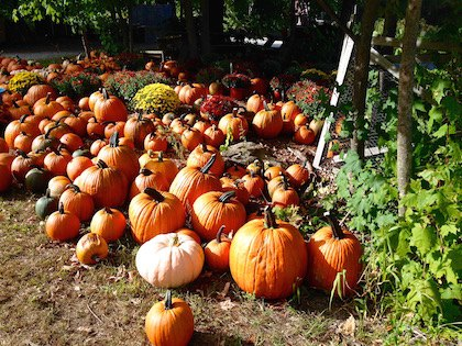 Fall Fun Guide: The Best Things to Do With Kids In Greater Boston