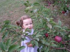 Apple Picking Near NYC Especially for Families with Toddlers