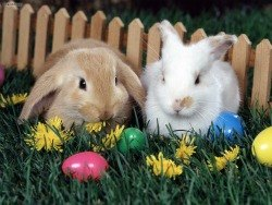 Egg Hunts and Bunny Fun on Easter Weekend for LA and OC Kids