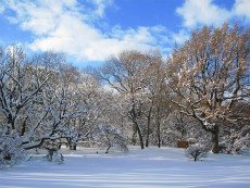 Prospect Park and the Brooklyn Botanic Garden in Winter: Things to Do with Kids