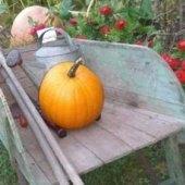 Pumpkin Picking Farms & Corn Mazes On Long Island