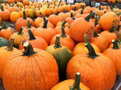 Pumpkin Patches for Boston Families