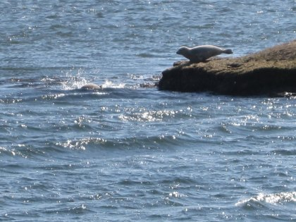 Seal Watching on Long Island