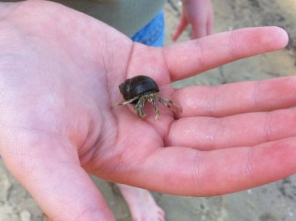 Finding hermit crabs is a popular activity on Little Sandy Beach