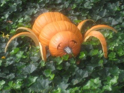 A gourd bug