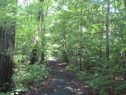 Urban forests in Van Cortlandt Park