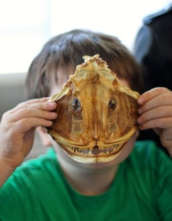 "Learning about the real ""monsters"" of the deep, like this anglerfish skull"