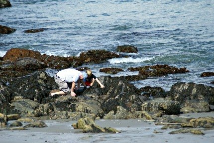 Tide pooling for sealife along Southern Maine's rocky coast.