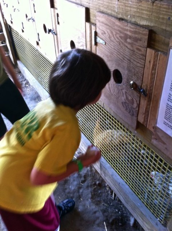 Gathering eggs from the hen house at Coonamesset Farm