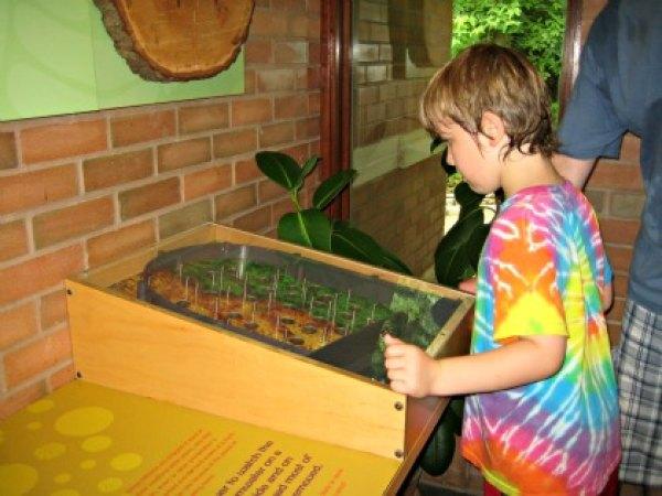 Interactive nature fun at the Greenbelt Nature Center