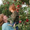 Pick Your Own Apple Farms for Families on Long Island