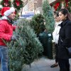Christmas Deal? Our Guide to Buying a Cheap Tree in NYC