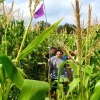 See NYC's Only Corn Maze and More Fall Fun at this Queens Farm