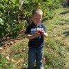 Let's Go Apple Picking at Karabin Farms in Southington