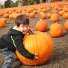 Top Pumpkin Picking Farms for New Jersey Families