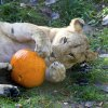 Halloween Fun at New Jersey Zoos