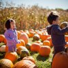 10 Real-Deal Pumpkin Patches Near Boston, Plus Our Favorite Pumpkin Bread Recipe