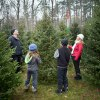Cut-Your-Own-Christmas-Tree Farms on Long Island