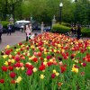 Weekday Picks for Boston Kids: Star Wars, Blooms, Cinco de Mayo , May 2-6