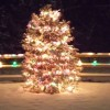 Cut-Your-Own Christmas Tree Farms in the Hartford Area