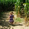 A-MAIZE-ing Corn Mazes in Houston