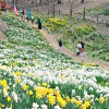 Weekend Fun for NJ Kids: Daffodil Day, Earth Day, Free Zoo