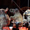 Weekday Picks for Westchester Kids: Circus, Yoga, Food Fun