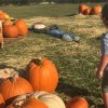 Fall Bucket List: 33 Things We Can't Wait to do This Fall in Houston