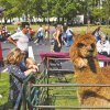 Fall Festivals in Westchester: Cider, Donuts, Pumpkin Carving & Hayrides