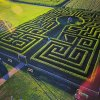 Corn Mazes and Fall Farm Fun for Long Island Kids