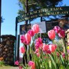 Spring Festivals for Families on Long Island, 2017