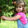 Best Pick-Your-Own Orchards for Families with Toddlers in Fairfield Area
