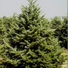 Christmas Tree Farms in Fairfield County