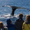 Family Whale Watching Cruise with the Aquarium of the Pacific: Thar She Blows!