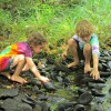 Play & Learn in the Great Outdoors: Nature Summer Camps in Westchester