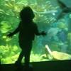 The New England Aquarium: Transformed?
