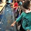 Norwalk Maritime Aquarium - A Water Wonderland